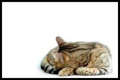 Śliczne koty! / Amazing cats! #cats #koty #tapetynapulpit #wallpapers #photos #zdjecia #zwierzeta #animals
