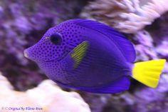 Série com peixes - Series with Fishes - - Vida Animal, Speed Paint, Water Life, Red Sea, Tropical Fish, Aquarium Fish, Sea Creatures, Beautiful Creatures, Animal Kingdom