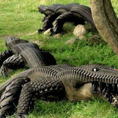 Who would have believed that old tyres could be transformed into art. These crocodiles are made from assorted tyres