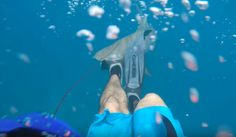 Reported a man while spearfishing in florida keys got beaten by shark, The emergence of sharks in Key West is not new, but shark attacks have never Shark Attacks, Spear Fishing, Best Scuba Diving, Marine Conservation, Florida Keys, Key West, Sharks, Beats, Ocean