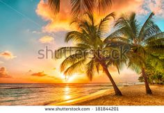 Beautiful sunset over the sea with a view at palms on the white beach on a Caribbean island of Barbados - stock photo
