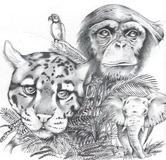 drawings of animals on Pinterest   Animal Drawings, Pencil Drawings ... Jungle Drawing With Animals