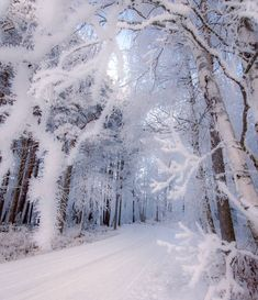 Snow, Winter Forest
