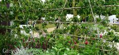 Growing apples in a flower garden