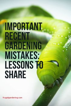 I made two serious gardening mistakes this season that I think are worth sharing with you all. One was a mistake that I shouldn't have made and another a simple error with significant consequences. Another A, Build Your Brand, Interesting Reads, Crypto Currencies, Diy Stuff, Personal Finance, Gardening Tips, Mistakes, Frugal