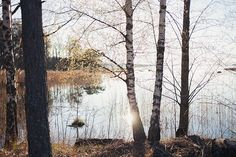 N E V N A R I E N - Fotografi / Natur & Växtlighet