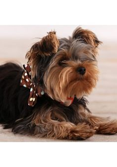 bow collar, too cute!