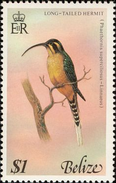 Long-billed Hermit stamps - mainly images - gallery format