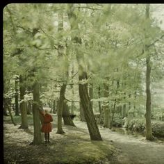 Great title, haunting photo: 'Fifi in the Forest' by Jacob Olie Jr, ca. 1910 - ca. 1927 -  Rijksmuseum.