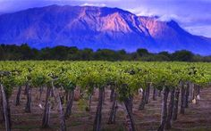 Some of the highest elevation vineyards in the world are in northern Argentina.  Mostly white wine production with Torrontes taking the lead.