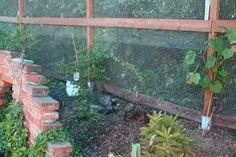 garten katzensicher plexiglas – Google-Suche Google, Plants, Searching, Planters, Plant, Planting