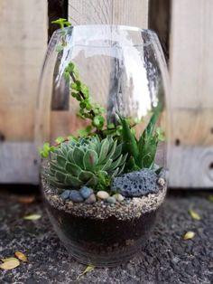 Belly vase Terrarium, Vase, Auckland, Plants, Home Decor, Terrariums, Flora, Interior Design, Vases