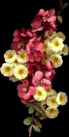 Pink and yellow blooms...