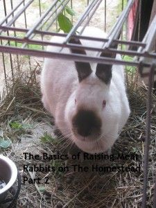 The Basics of Raising Meat Rabbits on The Homestead, Part 2 #rabbits #Selfsufficiency #homestead #preparedness #survival