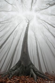 The most beautiful pictures of Romania: The Surreal Forests of Romania