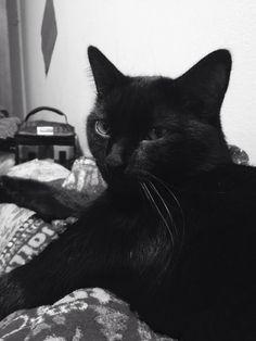 Cute cat(C.K.)