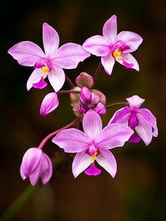 Pretty Little Purple Orchids