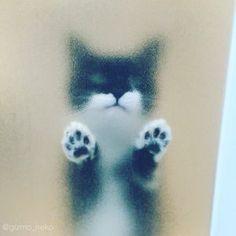 ここで、確実にじわじわくる『猫』の姿を見てみましょう - NAVER まとめ