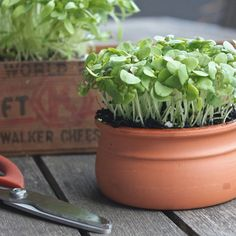 How to Re-Use Our Terracotta Pots at home