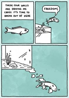 Laughed out loud on this one! Great Whale, Leaving Cards, Cartoon Fish, Fourth Wall, Bird Cards, Hilarious, Funny, Freedom, Quotes