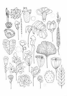 Garden Study by Marian Machismo