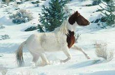 Wild horse in snow