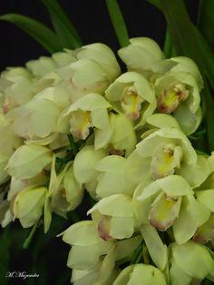 Orchid world – Gyűjtemények – Google+