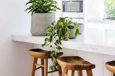 Sirih gading tidak hanya tumbuhan yang mudah ditanam dan dirawat. Lebih dari itu, ternyata sirih gading juga memiliki manfaat. Apa saja manfaatnya?