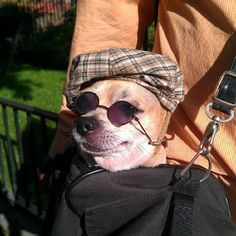 The dog with shades on Newbury St. in Boston