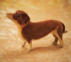 Miniature Dacshund