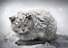 Умирала кошка на морозе...