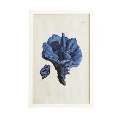 Wisteria - Mirrors & Wall Decor - Shop by Category - Wall Art - Coral Print - Carnation - $199.00