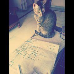 bubbles the architect, designing 👏 Bubbles, Cats, Animals, Design, Gatos, Animales, Animaux, Kitty, Design Comics