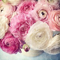 """shabby chic home decor, """"shades of pink"""", Ranunculus flowers, still life, floral photography, romantic, nature, spring, pink, white, pastel on Etsy, $25.00"""