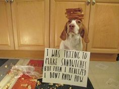 Dog Shaming features the most hilarious, most shameful, and never-before-seen doggie misdeeds. Join us by sharing in the shaming and laughing as Dog Shaming reminds us that unconditional love goes both ways. Funny Dog Fails, Dog Memes, Funny Dogs, Dog Funnies, Animal Funnies, Pet Humor, Animal Memes, Funny Animal Pictures, Funny Animals