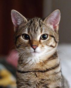 "arielislove: "" totalsherlockianfangirl: "" ruulee: "" (via gretilla, amnemonic) "" Dawww it looks like my kitty Dia ♥ """
