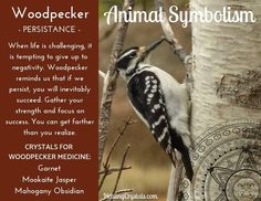 Animal Medicine: Woodpecker by Lizzy Baxter - Current Updates - Information About Crystals As A Healing Tool Animal Totem Meanings, Animal Symbolism, Spirit Animal Totem, Animal Spirit Guides, Spirit Meaning, Spiritual Animal, Animal Medicine, Power Animal, New Energy