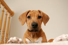 HellaWella   Pet-Safety Tips: Is Your Home Safe in an Emergency?