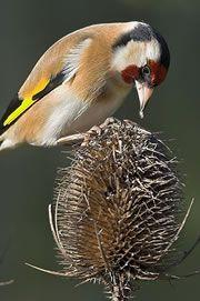 Best advice on bird feeding from the RSPB
