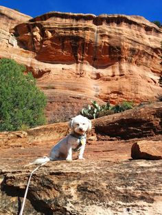 Your Dog Can Be Your Best Travel Buddy