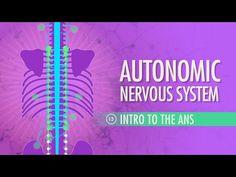 Autonomic Nervous System: Crash Course A&P #13 - YouTube
