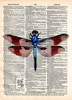 Dragonfly art print, Illustration of a dragonfly from a mid 1800's science journal. This illustration makes a very beautiful print. These unique and original artwork are printed on authentic vintage e