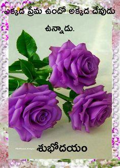 Purple Roses by angelita - Modern Beautiful Rose Flowers, Pretty Roses, Love Rose, Exotic Flowers, Amazing Flowers, Beautiful Flowers, Lavender Roses, Purple Flowers, Rose Violette