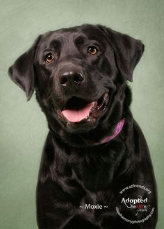 Photo by Jill Flynn - Labradors.com - Article Profile - Passionate Artists With Generous Hearts