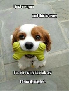 Squeak toy