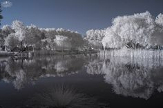 infrared by Recep Elal on 500px