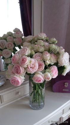#Rosierblanc #PierredeRonsard #Rosierbicolore #Parfum #Rose #Eden #Edenclimber #Romantique #Deco #Jardin #Bouquet Plantation, Shrubs, Parfum Rose, Floral Wreath, Wreaths, Bouquets, Flowers, Faces, Photos