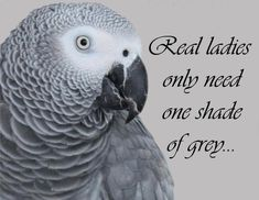 If you live with a grey, that greys all you need