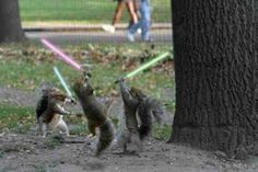 Squirrel Order. More ancient and powerful in the force.