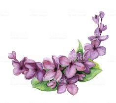 Watercolor lilac royalty-free watercolor lilac stock vector art & more images of abstract